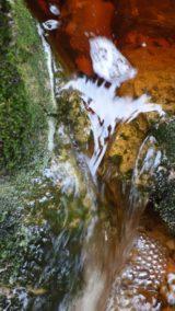 Rotwasser